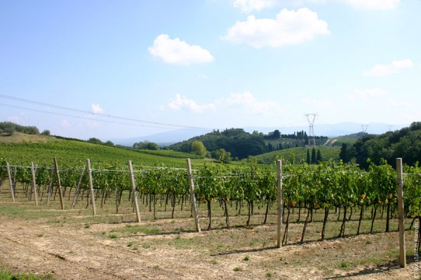 виноградники верначча