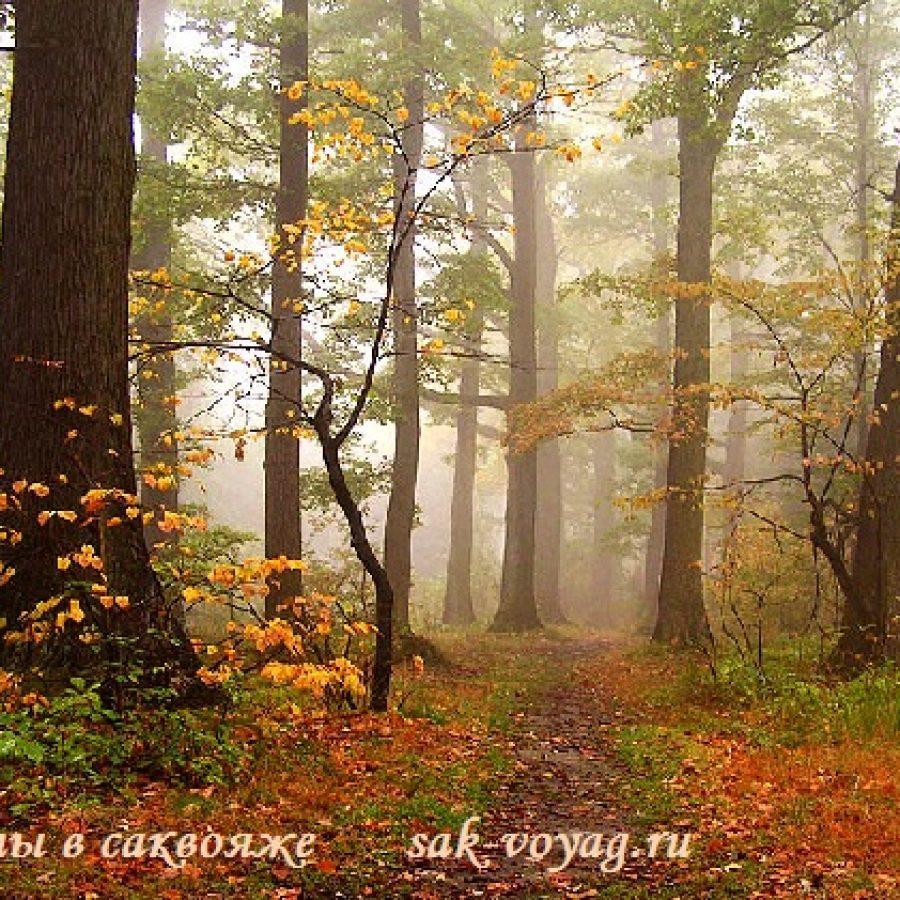 дождь, осень