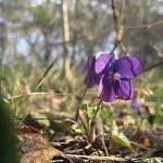 весна, пасхальный пост