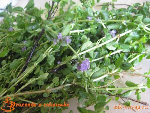 омбало, блошиная мята - ингредиент для соуса ткемали