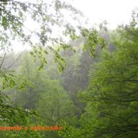 Цеми, пикник на природе